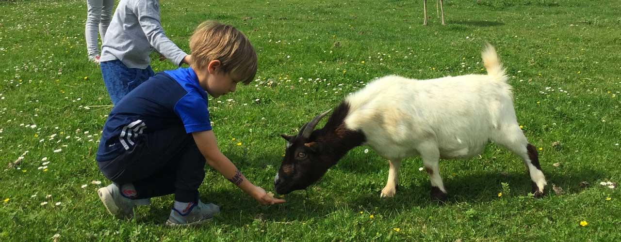 Animaux de la ferme au Pays Basque