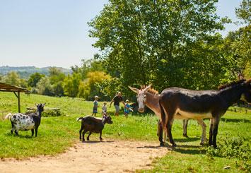 Camping pays basque - Animaux dans la ferme du camping